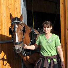 TJ, Stall, Pferde