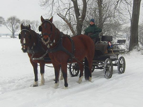 Kutschfahrt, Kutsche, Pferd
